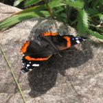 Butterfly's Rock 2010